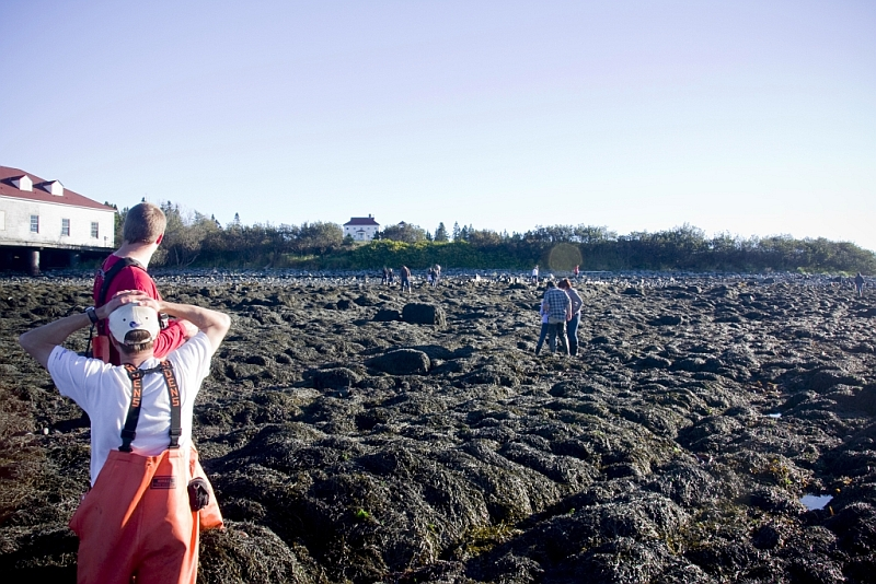 Quoddy_beach_tide_9_Oct2010
