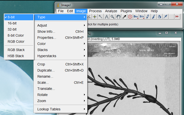 imagej convert to grayscale