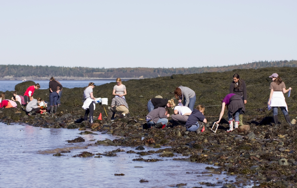 Quoddy_beach_tide_4_Oct2010